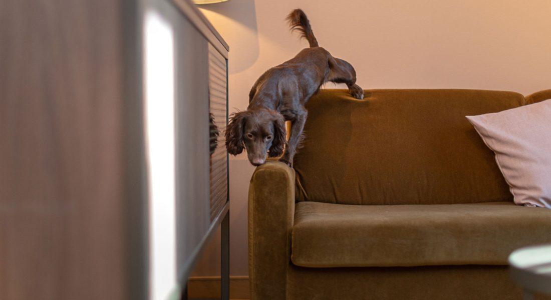 Hundsokning-loss-hemsida